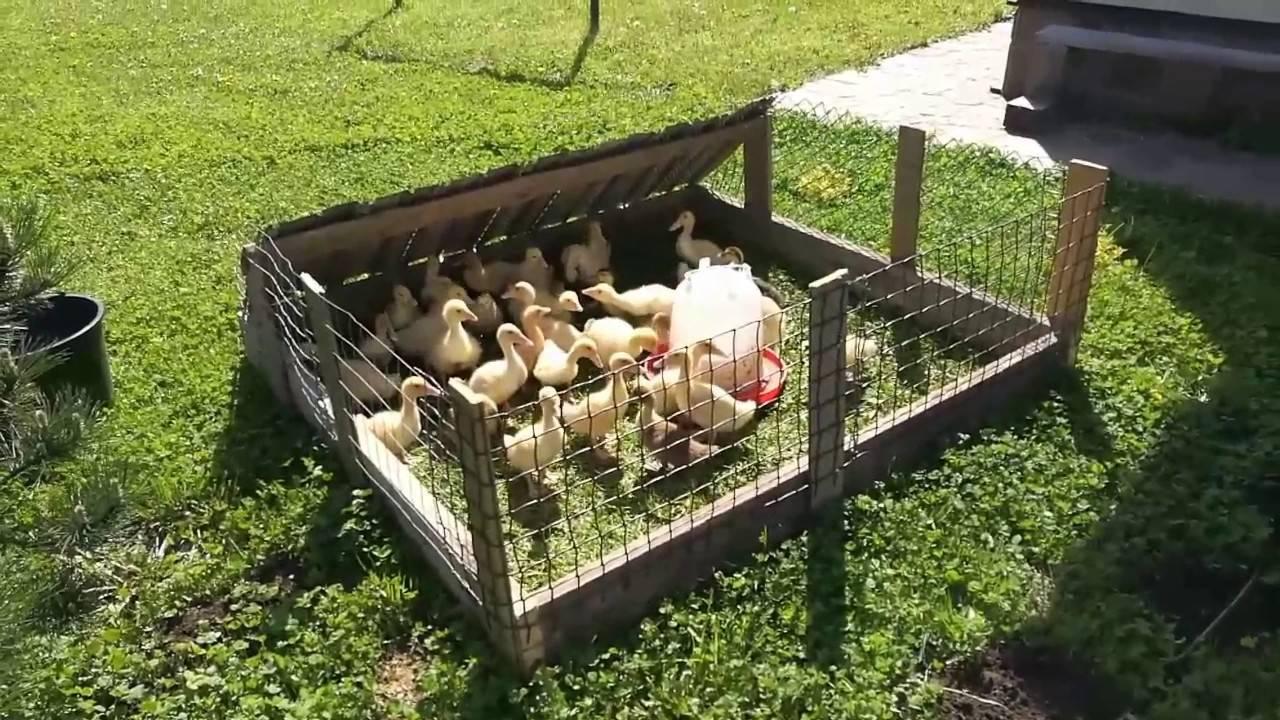 Строим теремок для гусей своими руками