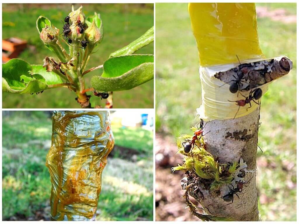 Как избавиться от тли на деревьях