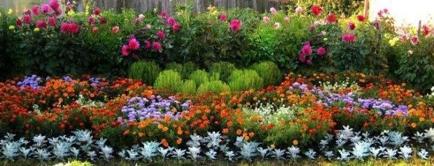 Колокольчик садовый (кампанула): посадка и уход, виды и размножение