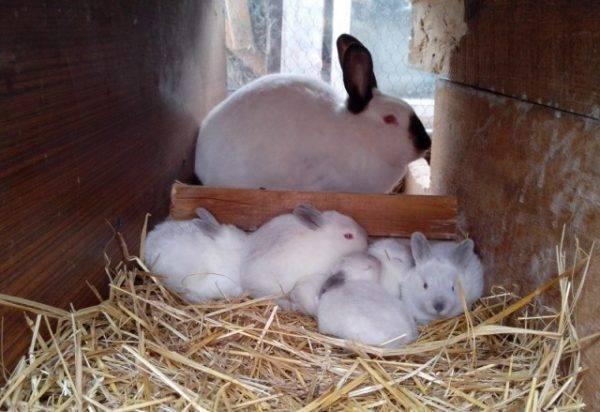 Почему дохнут кролики молодняк. почему кролики умирают без видимых причин? от чего умирают крольчата