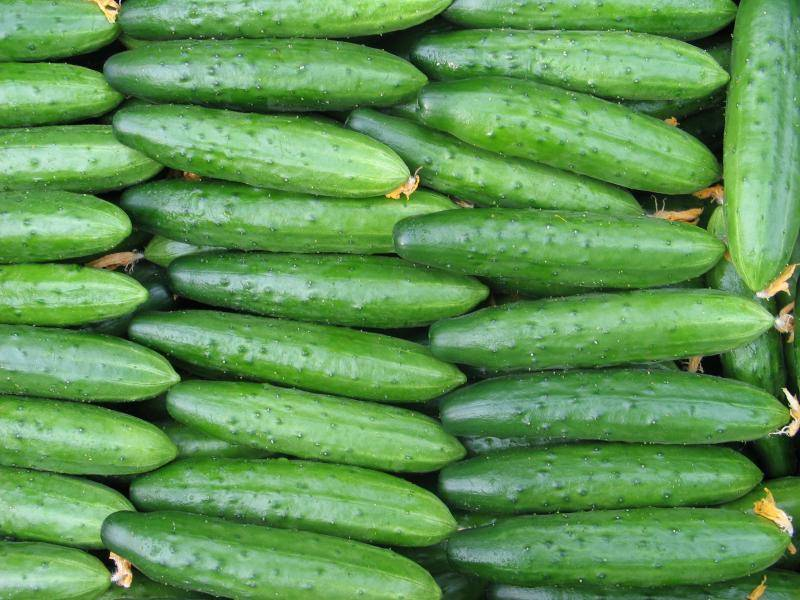 Выращивание огурцов в открытом грунте и теплице, инструкции с фото и видео | россельхоз.рф