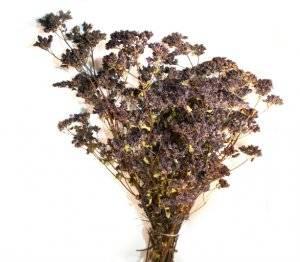 Выращивание душицы из семян: выбор материала и фото рассады, как выполнить посадку орегано в домашних условиях и где поместить всходы на участке?