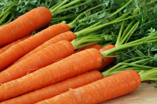 Морозы нипочем: как выбрать и вырастить ранние и другие сорта моркови для сибири в открытом грунте?