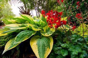 Неприхотливые тенелюбивые растения для сада многолетние: фото и название