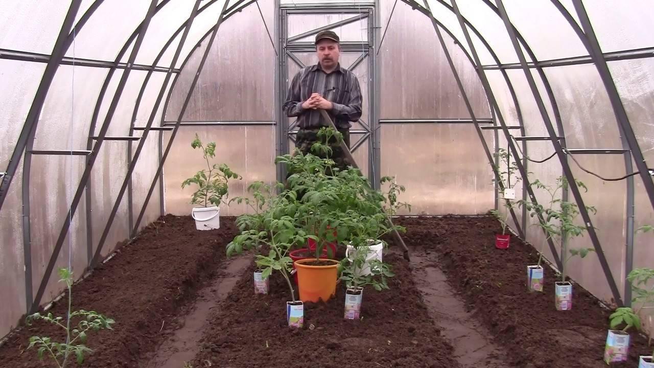 Чем отличаются сорта помидоров для открытого и защищенного грунта и можно ли томаты для улицы сажать в теплицу?