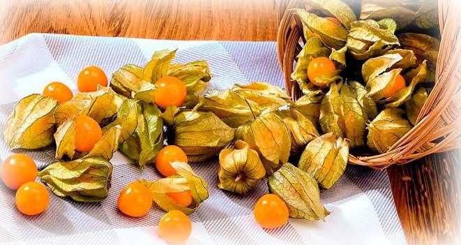 Клюква — описание растения и ягод, полезные свойства, противопоказания, состав, калорийность, фотографии