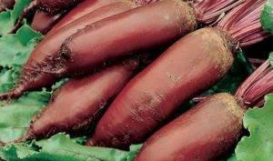 Семена свеклы лучшие сорта для открытого грунта