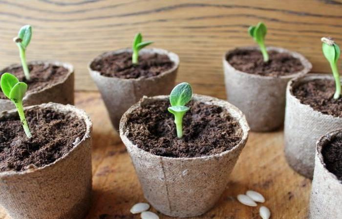 Выращивание рассады огурцов в 2019 году: лунный календарь работ