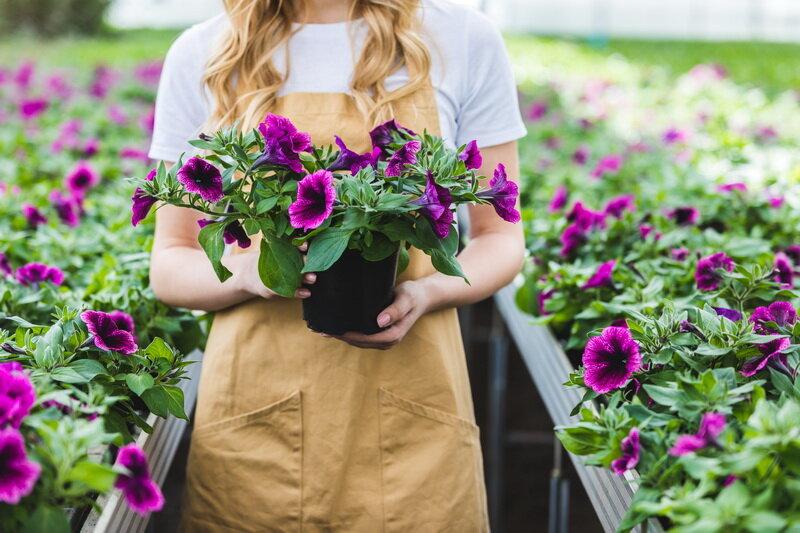 О прищипывании петунии: способы прищипывания для обильного цветения