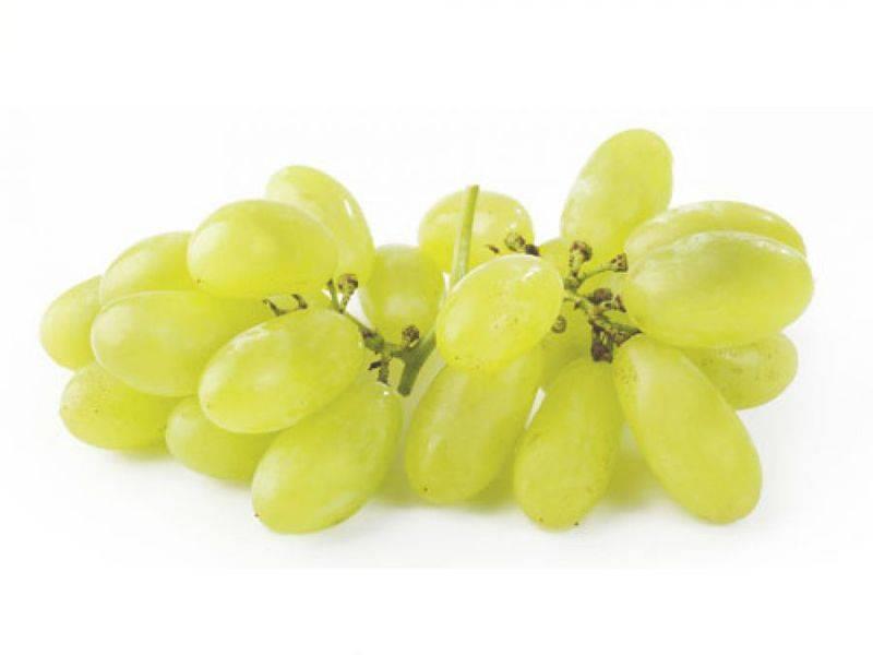 Дамские пальчики: виноград, который можно вырастить на даче