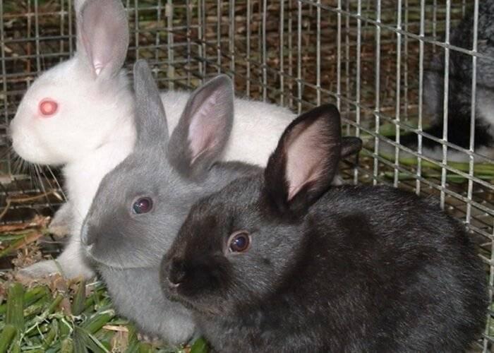 Все об искусственном вскармливании крольчат