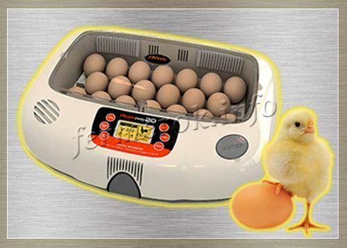 Об инкубаторе несушка: инструкция пользователя, схема, таблица инкубации, ремонт