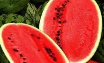 Секреты выращивания арбузов и дынь в теплицах и парниках