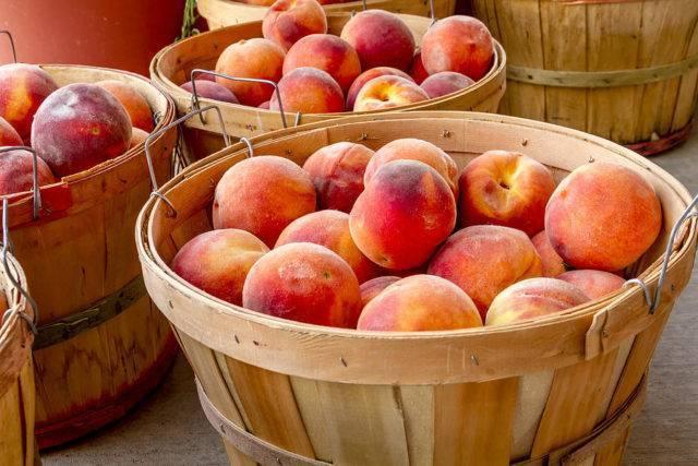 Когда лучше ехать в абхазию за фруктами