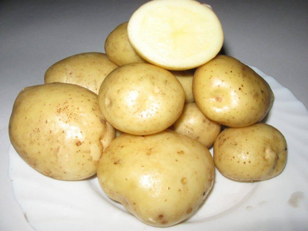"""Картофель """"триумф"""": описание сорта, характеристики, фото и особенности ухода"""