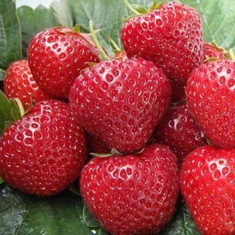 Клубника альба: описание сорта, выращивание и уход