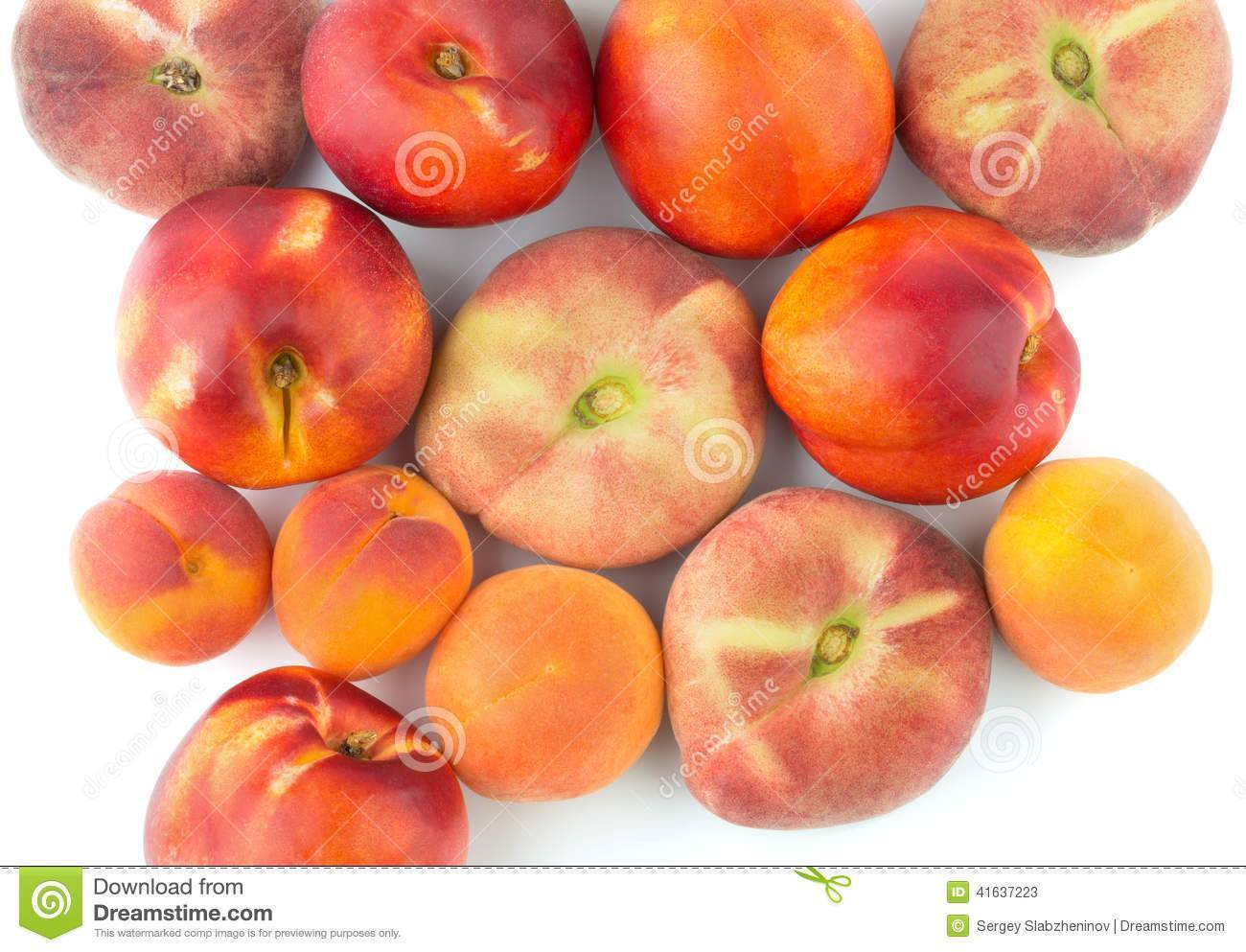 Гибрид сливы, абрикоса и персика шарафуга, фото - общая информация - 2020