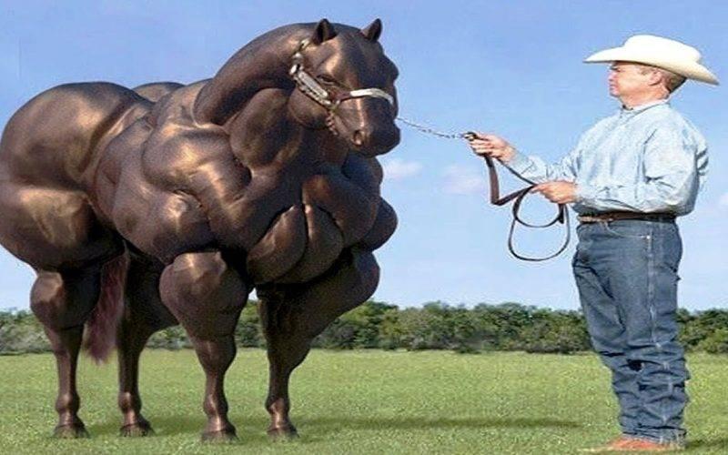 Виды и особенности диких лошадей