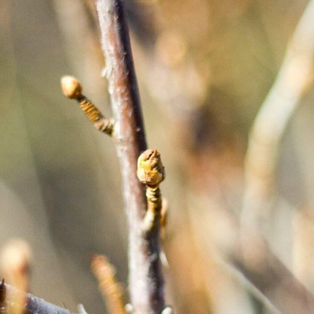 Почковый клещ на смородине — меры борьбы весной и осенью