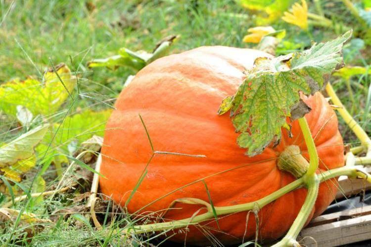 После чего можно сажать помидоры на следующий год: огурцы, перцы, лук, картофель или клубника - какие культуры помогут томатам лучше расти и наоборот?