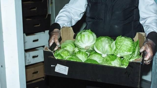 Самый популярный сорта салата в мире — выращиваем айсберг!