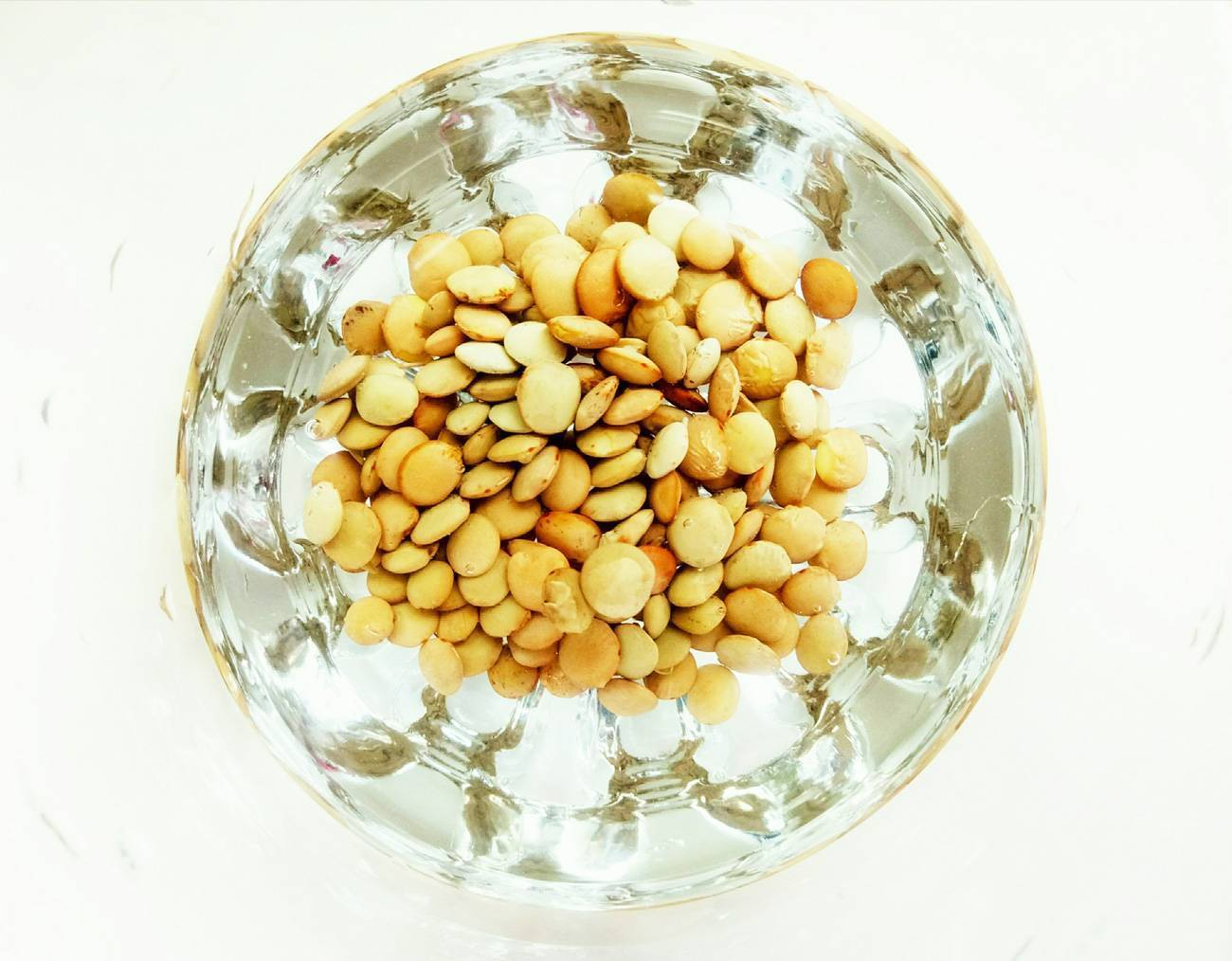 Оранжевая чечевица прорастить в сыром виде. как и какую чечевицу можно проращивать дома для еды. как проращивать бобовые