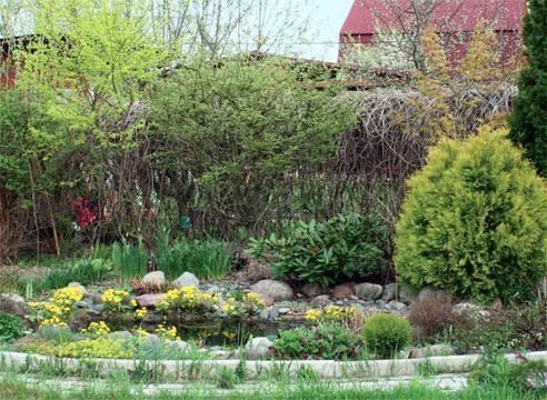 Клумба непрерывного цветения: круглогодичное украшение сада