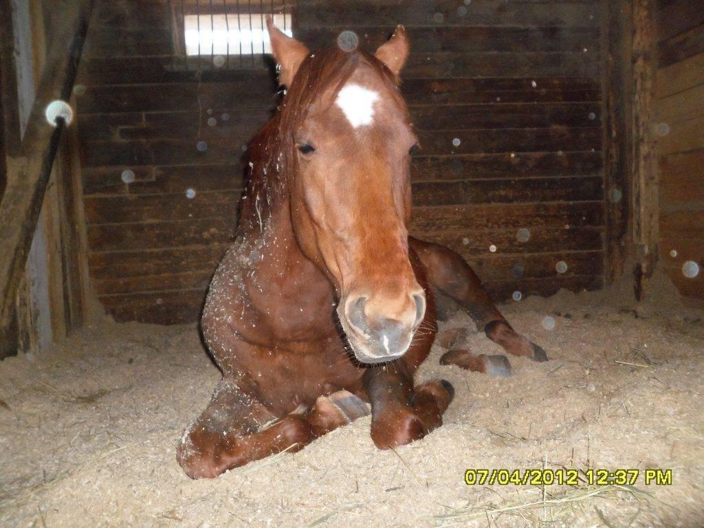 Как спят лошади? 27 фото это происходит стоя или лежа? сколько часов спят кони? спят ли лошади с открытыми глазами?