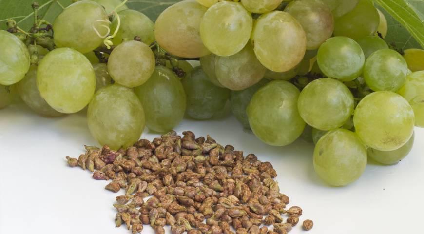 Как вырастить виноград из косточки в домашних условиях в горшке. как вырастить виноград из косточки в домашних условиях. выращивание в горшке