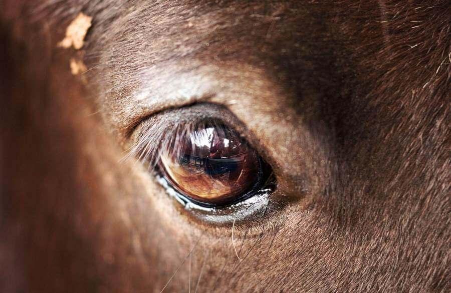 Сонник глаза лошади. к чему снится глаза лошади видеть во сне - сонник дома солнца