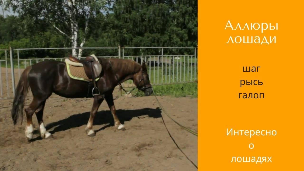 Аллюры лошадей: разновидности бега, их описание и характеристика
