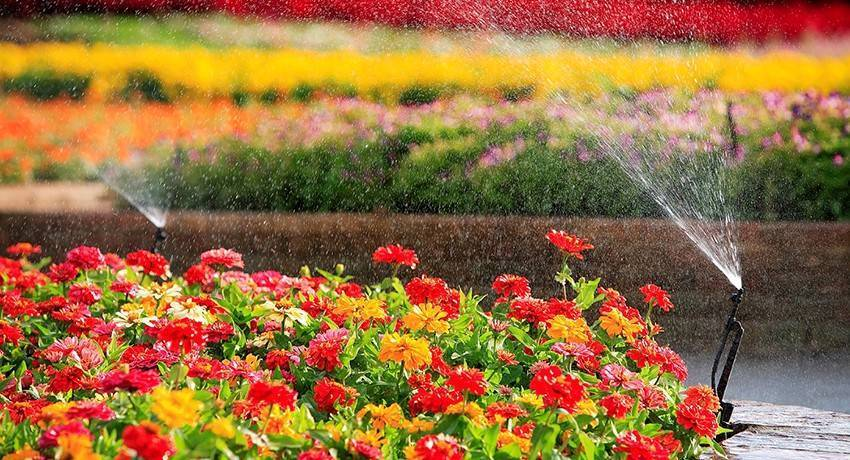 О дождевателе для полива: разбрызгиватель воды для огорода и газона