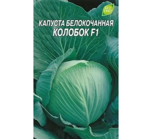 О капусте колобок: характеристика и описание сорта, когда сеять на рассаду