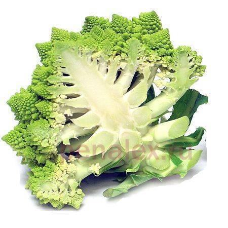 Капуста романеско – польза и вред - свойстава и калорийность, польза и вред на your-diet.ru | здоровое питание, снижение веса, эффективные диеты