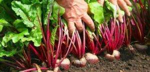 7 пар растений, которые нельзя выращивать рядом