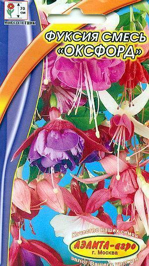 Фуксия: посадка, описание, сорта, уход в саду, размножение