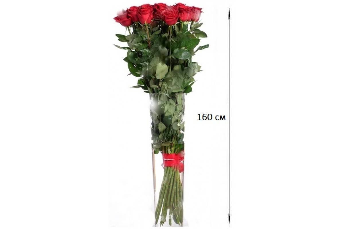 Цветы розы с описанием, названием сортов и фото: садовые и парковые новые сорта