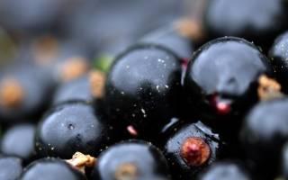 Топ-7 самых сладких сортов черной смородины