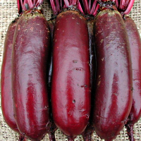 Выращивание свеклы: секреты, как получить хороший и крупный урожай с огородов и дачгде садят овощ и почему важна агротехника и пошаговый уход в открытом грунте