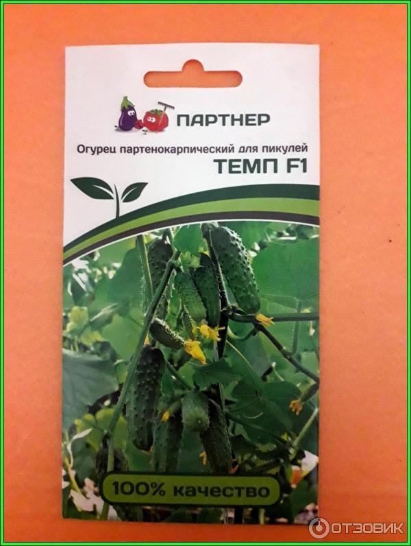 Огурец «темп f1»: описание гибридного сорта, фото и отзывы