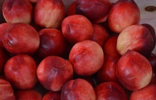 Особенности гибрида яблока с персиком