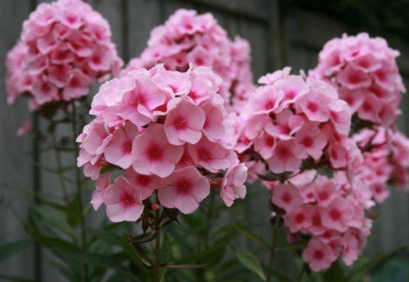 Подкормка во время цветения: расклад по элементам, рекомендации по культурам