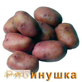 Сорт картофеля елизавета: описание и характеристика, отзывы