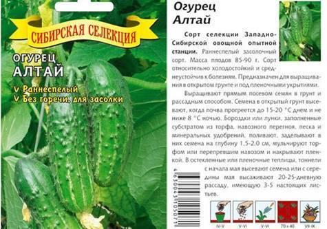 Вкусные плоды для любых условий — огурец аскер f1: полное описание сорта