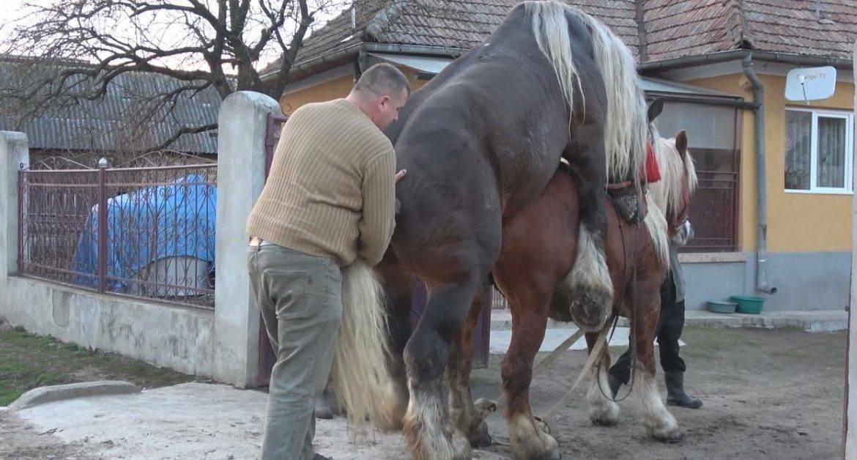 Лошадиное спаривание осел и лошадь. как спариваются лошади? для чего? осеменение искусственным способом