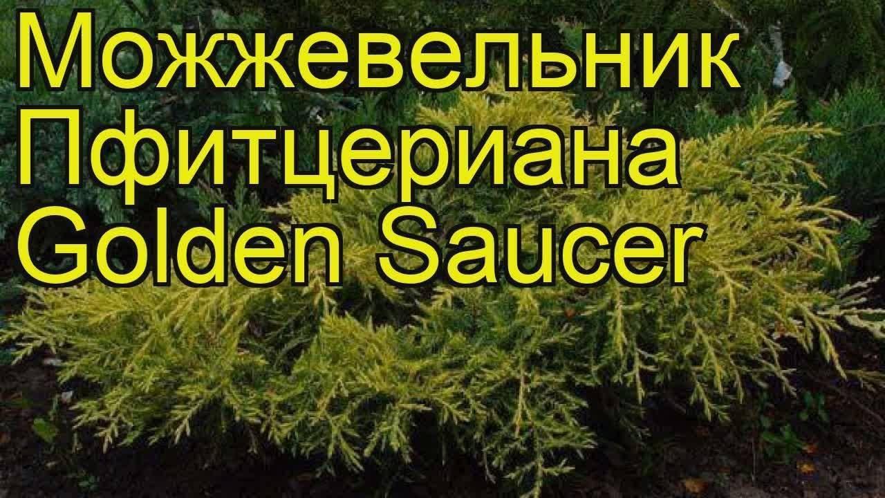 Можжевельник в ландшафтном дизайне: посадка, уход и сорта растения + фото