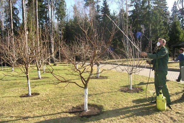 Обработка яблонь от вредителей