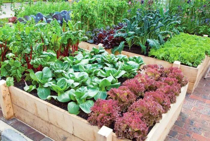 Что посадить рядом с грядкой капусты для ее защиты от вредителей и болезней