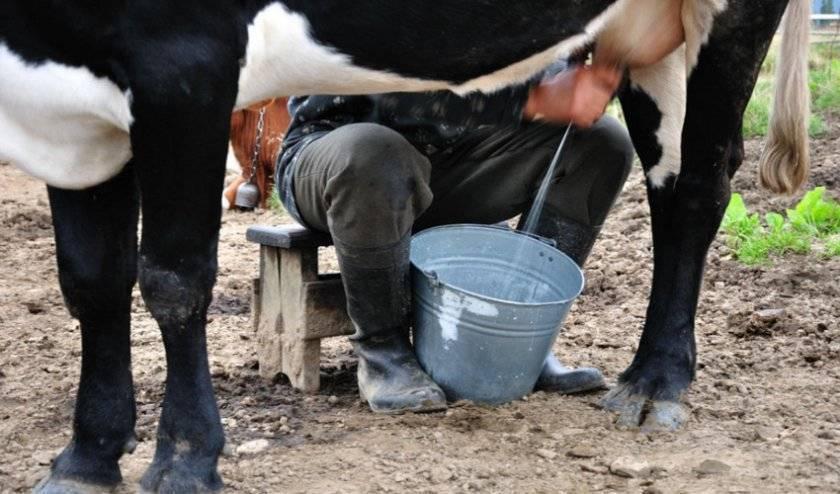Показатель продуктивного коровьего молока — жирность