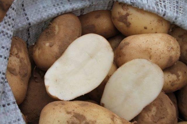 Весна: описание семенного сорта картофеля, характеристики, агротехника